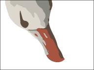 The Albatross thumbnail